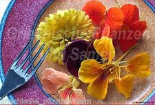 ESSBARE BLÜTEN * 500 Samen * Dekoration * Feinschmecker * für Balkon * gesund