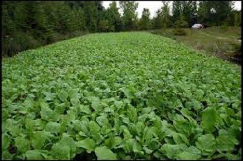 5# DEER GREENS /& CLOVER Food Plot Seed Mix W// Clovers Chicory Radish Rape Turnip