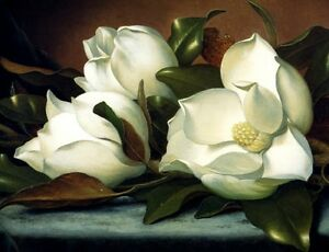 Two Magnolias Flowers Blue Cloth 1885 Painting By Martin Johnson