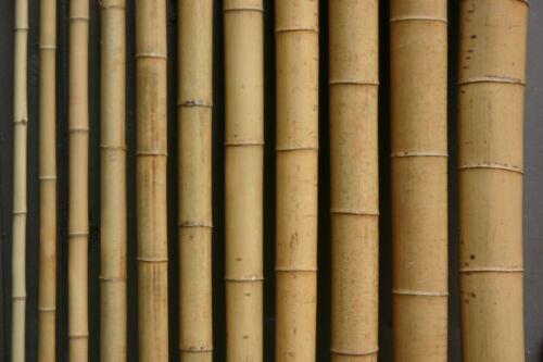Bambusrohr  6-7 cm 1m Bambusrohre Bambusstange Bambusstangen Bambushalm Bambus