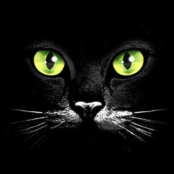 Green Eye Black Cat HEAT PRESS TRANSFER for T Shirt Sweatshirt Tote Fabric 275e