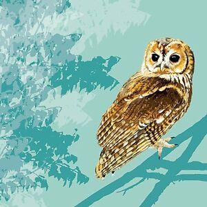 RSPB Tawny Owl Bird large square greetings card blank ...