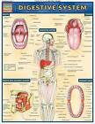 Digestive System: Reference Guide by BarCharts (Other book format, 2001)
