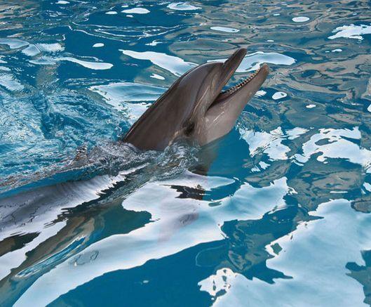 3D Relax Dolphin Ocean Floor WallPaper Murals Wall Print Decal 5D AJ WALLPAPER