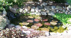 Image Is Loading Aquascape Pond Kit 8 039 X11 039 W