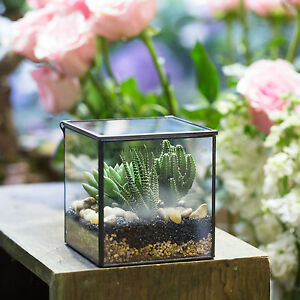 Image Is Loading Square Glass Geometric Terrarium Tabletop Succulent Plant  Terrarium
