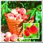 thumbnail 1 - Sweet-Peach-Autumn-Plants-Red-Tree-Fruit-Home-Garden-Pots-Flowers-10-PCS-Seeds-V