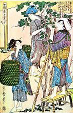 Incorniciato stampa-vintage asiatico giapponese cinese geisha GIARDINAGGIO (Picture Oriental