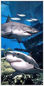 30-034-x60-034-White-Shark-Premium-Beach-Towel
