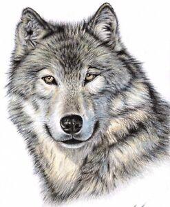 Wolf Leopard O Leone Fine Art Print A4 Animali Fantastici Disegno