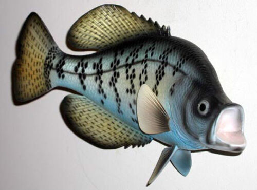 "Tropical Fish Wall Plaque ~ Crappie//Pearch Replica Mount ~ 8/"" X 15/"""