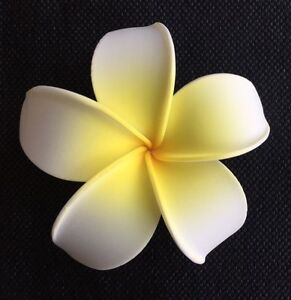 Details about Hawaiian Plumeria Foam Flower Hair CLIP Yellow White Wedding  Bridal Luau Prom