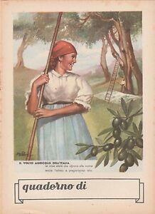 QUADERNO-1940-1950-IL-VOLTO-AGRICOLO-DELL-039-ITALIA-Q88