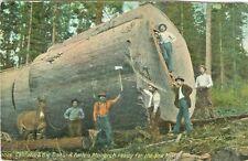 Santa Cruz CA Lumbermen and Fallen Monarch, California Big Trees, Maryville 1908
