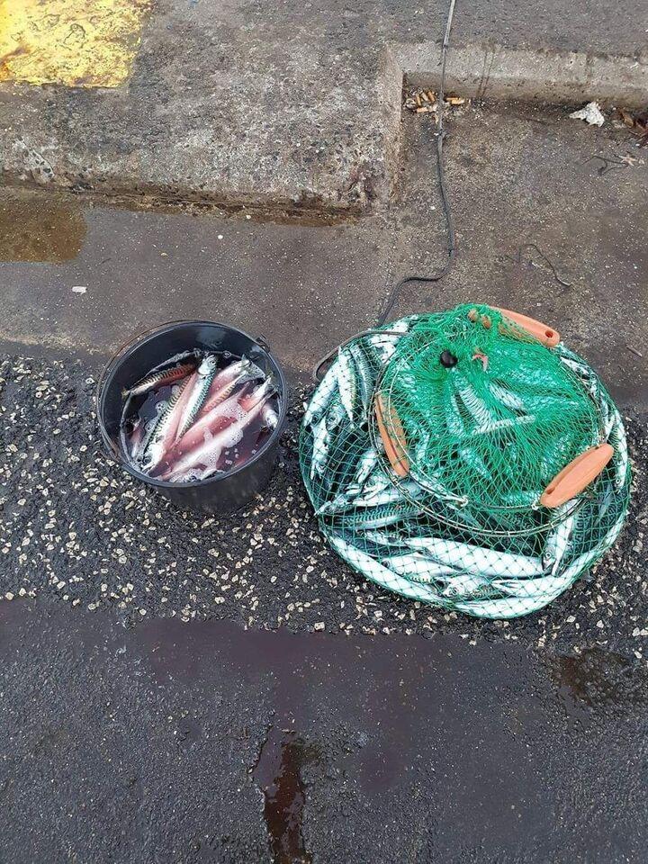 Forfang, makrel forfang