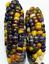 Corn-Gemstone-A-Stunning-amp-Beautiful-Gemstone-Lookalike-Corn-Variety