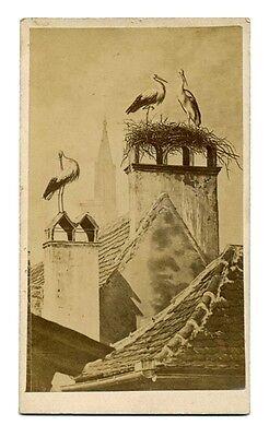 Carte Visite Cigognes Strasbourg ( Référence 2 ) Elegant In Stijl