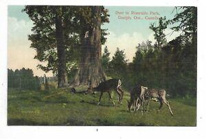 034-GUELPH-ON-039-Deer-in-Riverside-Park