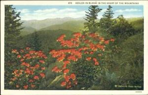 ogp-Flower-Postcard-Azalea-in-Bloom