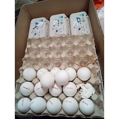 faule Eier, mehr als 300 Stück, von Ostern 2017