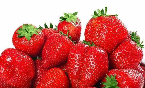 100 graines de Graines de fraises pour plantes de fruits rouges et grimpantes
