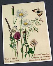 Villeroy Boch VilboCard Porcelain Postcard A54 JUNE Edith Holden Floral Flowers