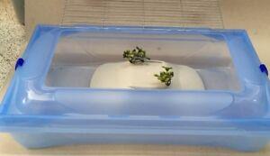Tartarughiera grande kleo vaschetta tartaruga con isolotto for Tartarughiera in plastica grande