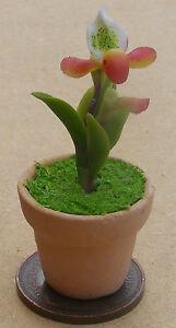 GéNéReuse Échelle 1:12 Multi Couleur Orchidée + Pot Tumdee Maison De Poupées Jardin Accessoire 33-afficher Le Titre D'origine