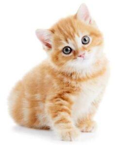 Sticker-decal-wall-fridge-children-room-animal-decorate-foxy-cat-kitten