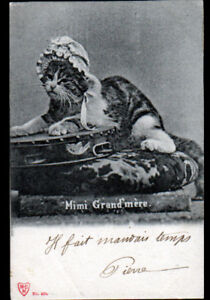 CHAT-HUMAIN-MIMI-GRAND-MERE-avec-INSTRUMENT-MUSIQUE-a-percussion-en-1902