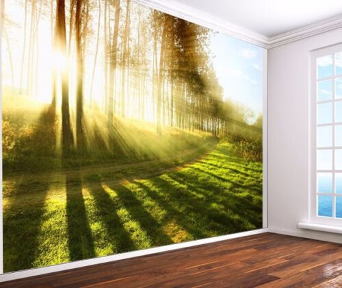 12479658 Sunlight through the trees forest wood stunning Wallpaper wall mural