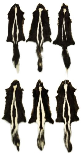 """AuSable Brand Professionally Tanned Skunk Fur Pelt With Tail 28/"""" 6 Pelts"""