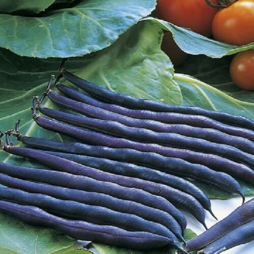 3 Sorten Zwerg Französische Bohnen Gemüse 65 Samen