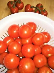 25 Organically Grown Serrat Cluster Tomato Seeds-E 122