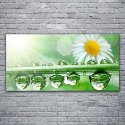 Acrylglasbilder Wandbilder aus Plexiglas® 120x60 Tau Blatt Gänseblümchen Natur