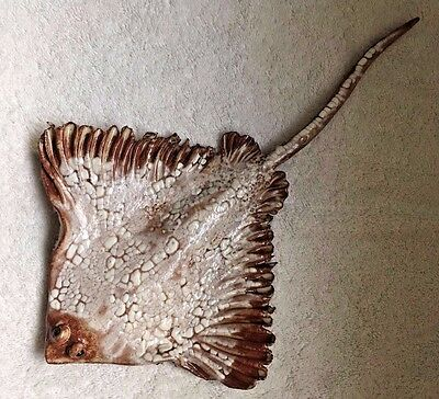 Vicki Sutton Hand Sculpted Stoneware 8x10 in Brown Sting Ray Wall Hanging Signed