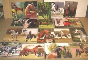 Lot of 18 Arabian Show Horse Promotional Stud Color Photo Ad Sheets with Specs
