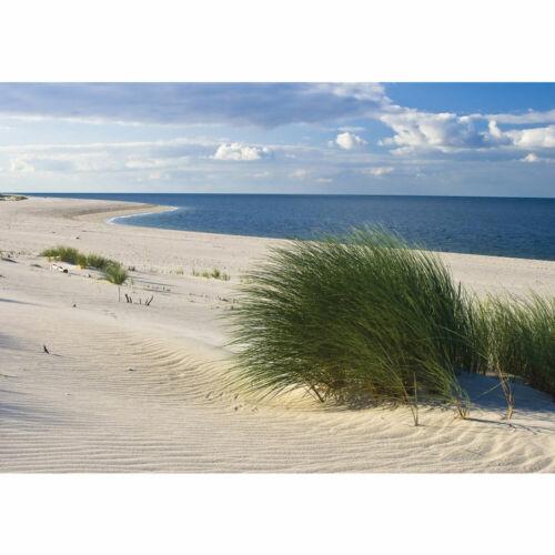 1933 Fototapete Strand Meer Dünen Gras Wolken Ostsee liwwing no