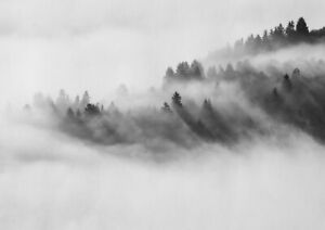 A1| Foggy Forest Poster Art Print Size 60 x 90cm Nature Wall Decor Gift #14165