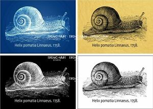 Poster land snail helix pomatia home decor wall art print gift pet image is loading poster land snail helix pomatia home decor wall malvernweather Gallery