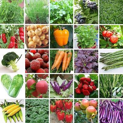 HYBRID ORGANIC SURVIVAL PLANT BANK LOTHEIRLOOM VEGETABLE GARDEN SEEDS NON GMO