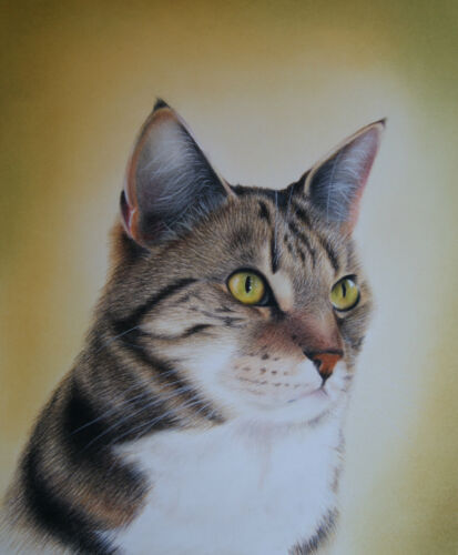 TABBY CATS Cat Mousemat by UK artist 16 Images To Choose From *