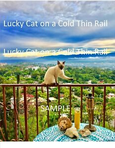 Beautiful-Picture-over-looking-the-Haitian-Landscape-Cat-on-a-Cold-Thin-Rail