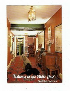 POST CARD COLOUR PHOTO THE WHITE HART HOTEL MORTENHAMPSTEAD - St Agnes Truro Cornwall, United Kingdom - POST CARD COLOUR PHOTO THE WHITE HART HOTEL MORTENHAMPSTEAD - St Agnes Truro Cornwall, United Kingdom