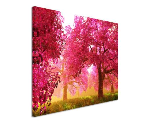 Leinwandbild 120x80cm auf Keilrahmen Baum,roßa,blühen,Spaziergang,Frühling,pink