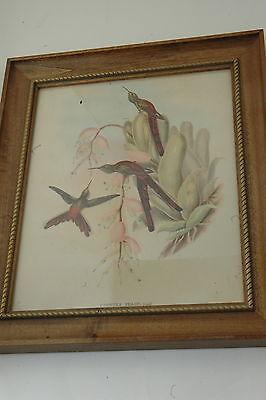"""1942 Vintage AUDUBON BIRDS #278 /""""WHITE RUMPED SANDPIPER/"""" BEACH Color Art Litho"""