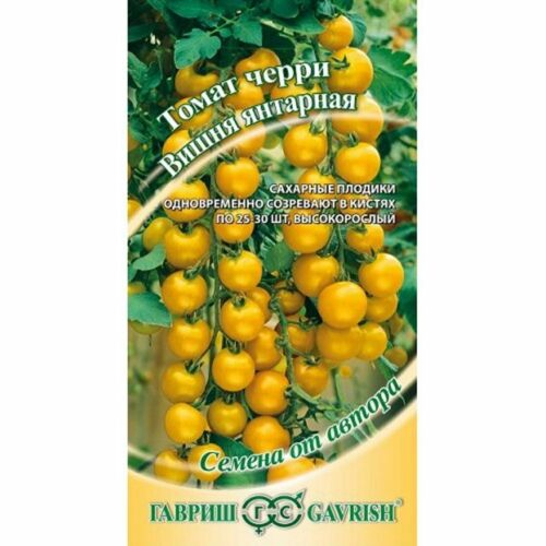 RUSSIAN CHERRY TOMATO SEEDS LONG TRUSSES WITH UPTO 30 YELLOW FRUITS PER A TRUSS