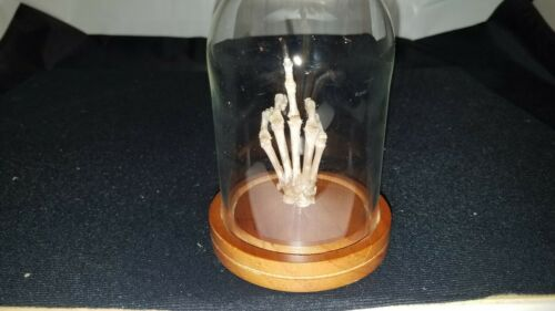 """Middle Finger Paw Real Raccoon /""""Flipping Off/"""" Skeleton Skull Hand Foot"""