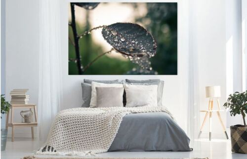 blurcloseupdewHOME BEAUTIFUL WALL DECOR Art Canvas choose your size