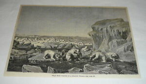 1878-magazine-engraving-POLAR-BEARS-FEASTING-ON-STRANDED-WHALE